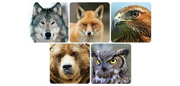 Znakovi od 5 mističnih životinja: Koja vas najviše doziva i što govori o vama?