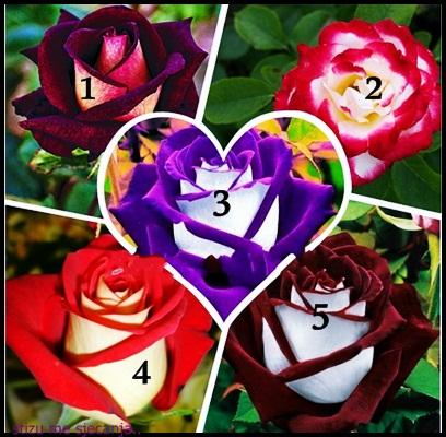 Ruža koju odabereš otkriće hoće li se OSTVARITI tvoja najveća ŽELJA