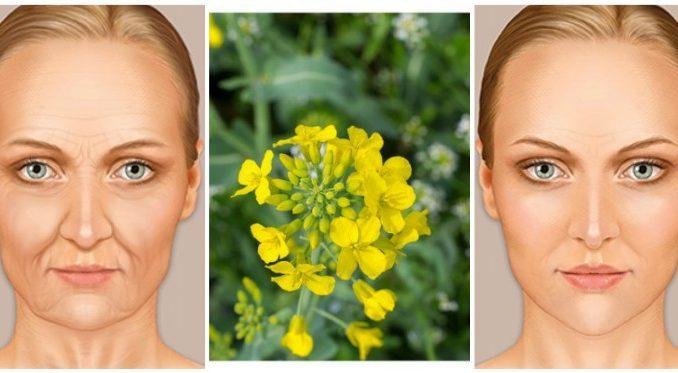 Efekat je čudesan! recept koji morate probati: Skida 10 do 20 godina sa lica i tijela,